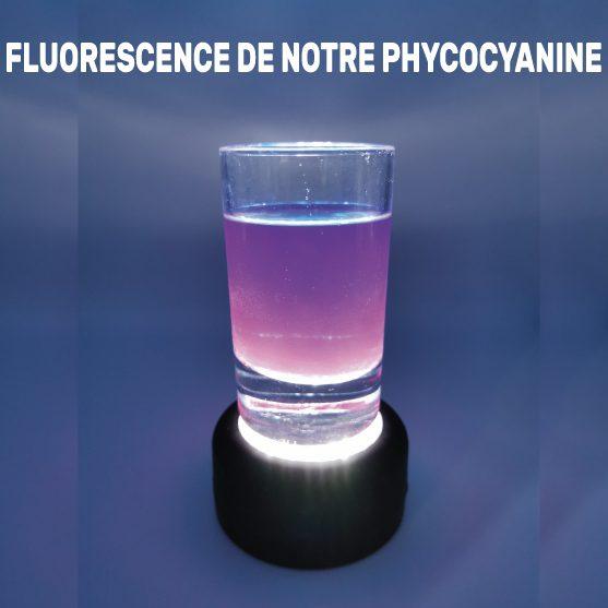 fluorescence phycocyanine de Julie